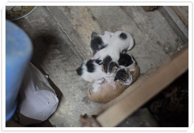 꾸미기_1핑퐁 4마리 새끼고양이.jpg