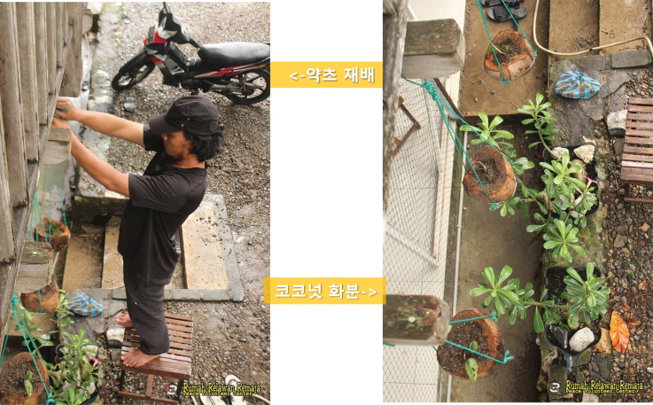 [꾸미기]약초와 코코넛 화분.jpg
