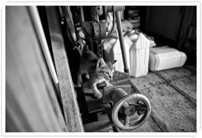 꾸미기_13R 0118 새로운 새끼 고양이 02.jpg