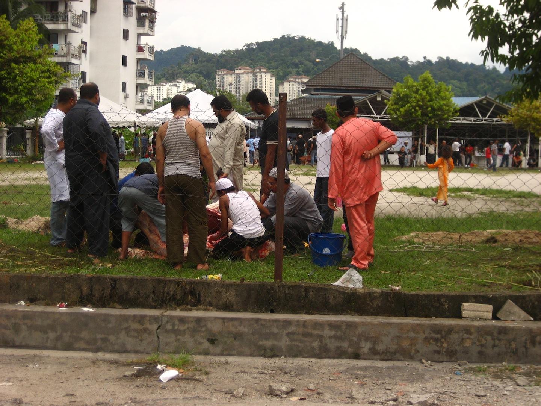 Killing the cows at the mosque for Hari Raya 1.JPG